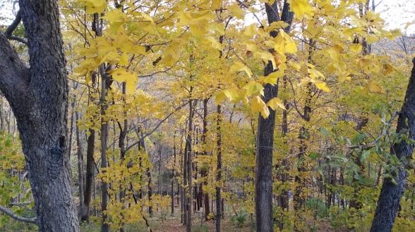 Fall Forrest